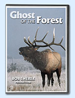 Buy Ghost of the Forest on DVD by Bob Swerer Nature Videos